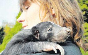 Unser Knut heißt Stinkibär!