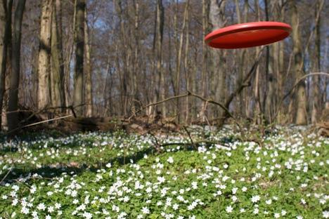 frisbee discgolf