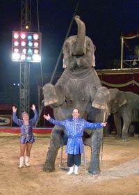 Menschen – Tiere – Sensationen: Circus Berolina
