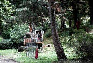 Wallsanierung weckt Unmut — Naturschützer wollen gegen Baumfällungen demonstrieren