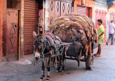 Marrakesch Eselkarren mit Schafsfellen