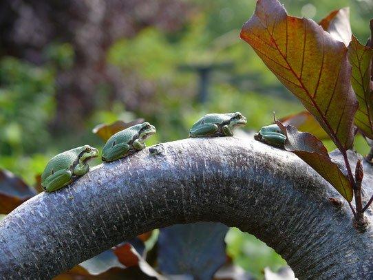 Amphibien für Arndt